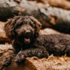 Schulhund Jupp (Vorstellung und KOnzept)